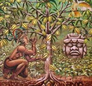 Какао - дерево, дающее шоколад-4