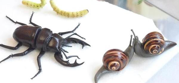 Шок.насекомые