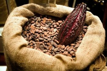 Великое превращение из бобов в шоколад-1